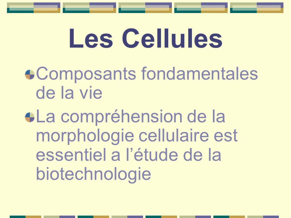 Les Cellules Composants fondamentales de la vie La compréhension de la morphologie cellulaire est essentiel a l'étude de la biotechnologie