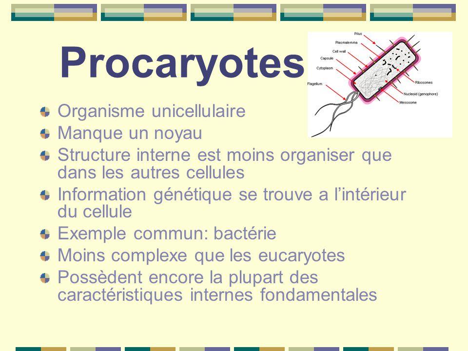Procaryotes Organisme unicellulaire Manque un noyau Structure interne est moins organiser que dans les autres cellules Information génétique se trouve a l'intérieur du cellule Exemple commun: bactérie Moins complexe que les eucaryotes Possèdent encore la plupart des caractéristiques internes fondamentales