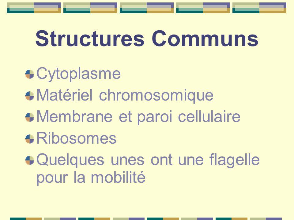 Structures Communs Cytoplasme Matériel chromosomique Membrane et paroi cellulaire Ribosomes Quelques unes ont une flagelle pour la mobilité