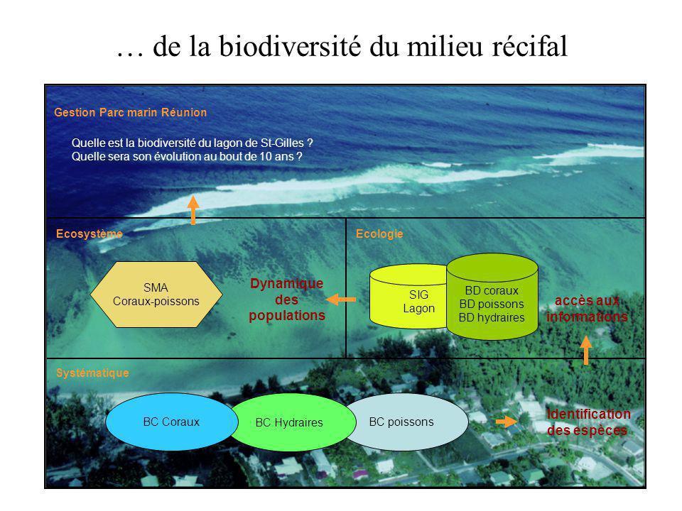 BC poissons Ecosystème Identification des espèces Gestion Parc marin Réunion SMA Coraux-poissons SIG Lagon accès aux informations BD coraux BD poisson