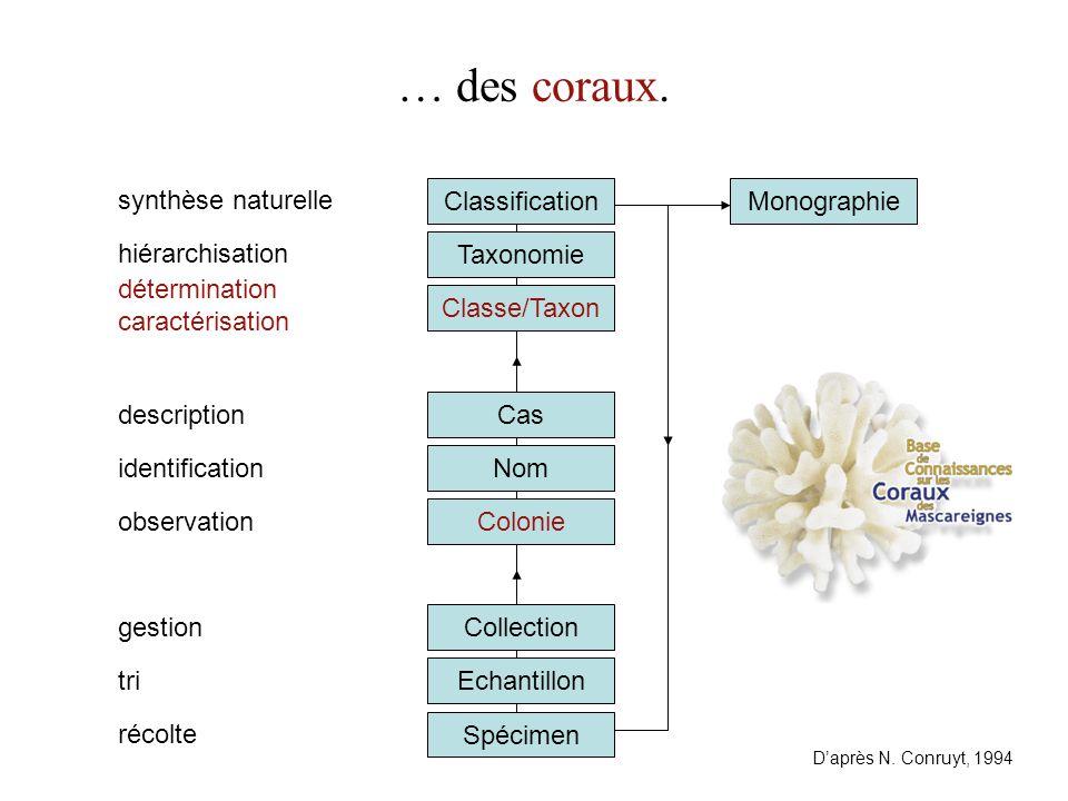 Cas Classe/Taxon Taxonomie Classification … des coraux. Spécimen Echantillon identification hiérarchisation tri Collection Colonie récolte synthèse na