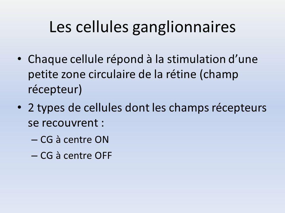 Les cellules ganglionnaires Chaque cellule répond à la stimulation d'une petite zone circulaire de la rétine (champ récepteur) 2 types de cellules don