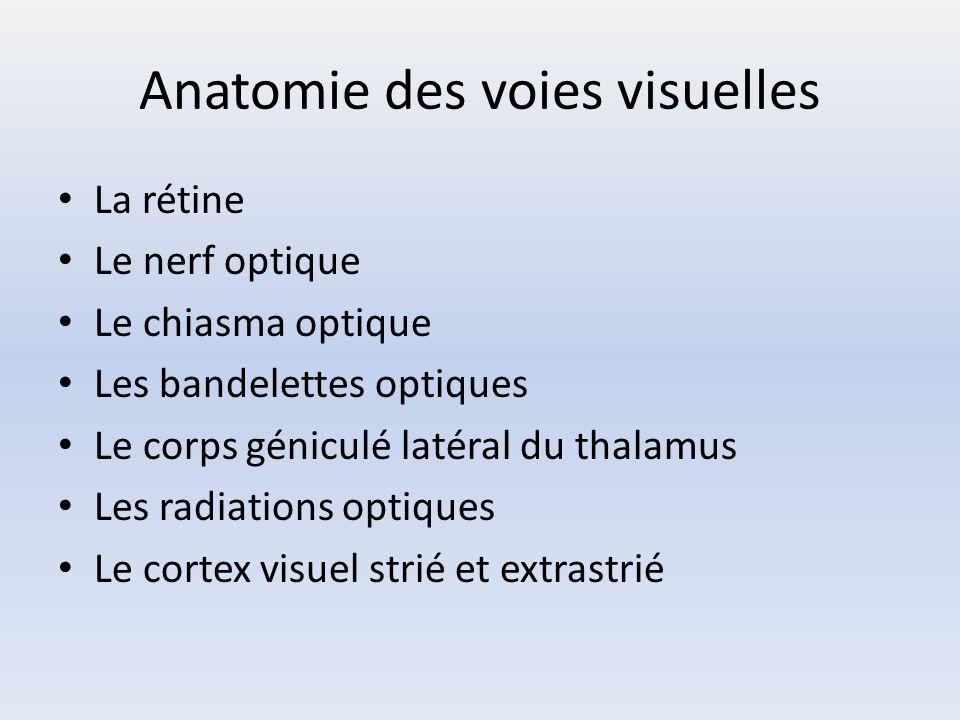 Anatomie des voies visuelles La rétine Le nerf optique Le chiasma optique Les bandelettes optiques Le corps géniculé latéral du thalamus Les radiation