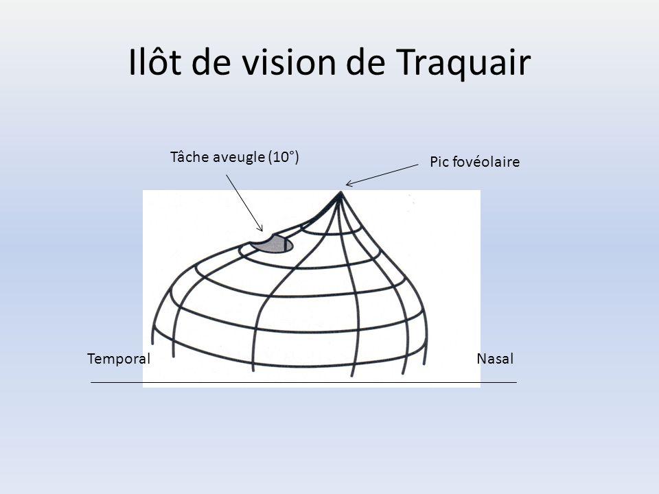 Ilôt de vision de Traquair Pic fovéolaire Tâche aveugle (10°) TemporalNasal
