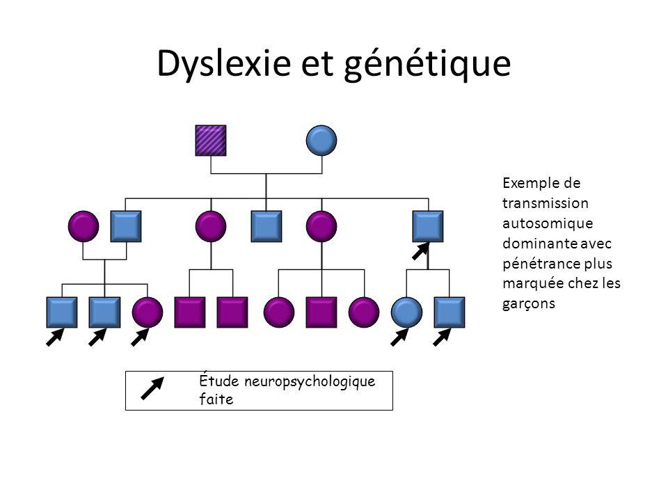 Exemple de transmission autosomique dominante avec pénétrance plus marquée chez les garçons Étude neuropsychologique faite Dyslexie et génétique