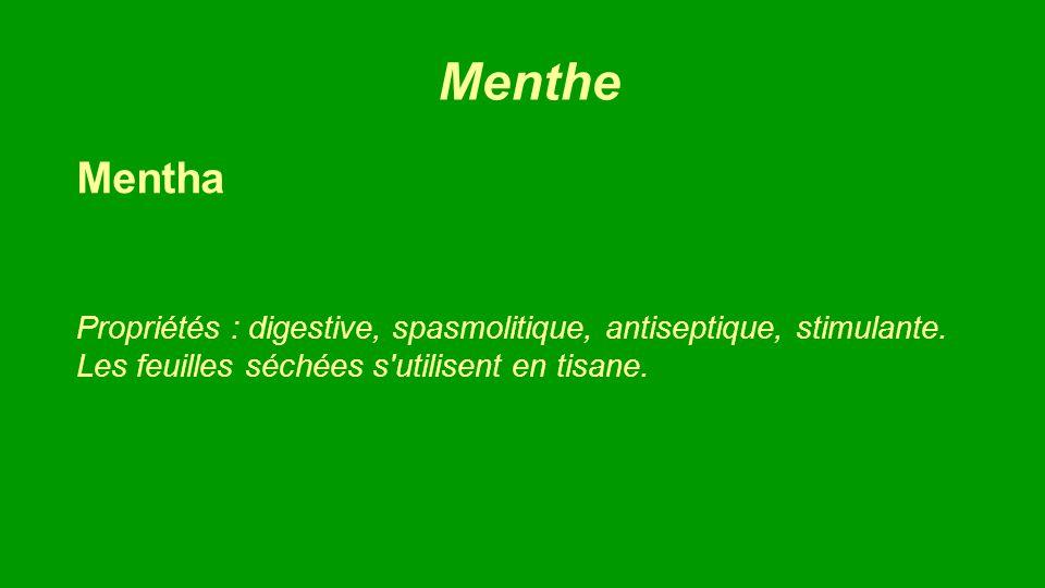 La Mélisse