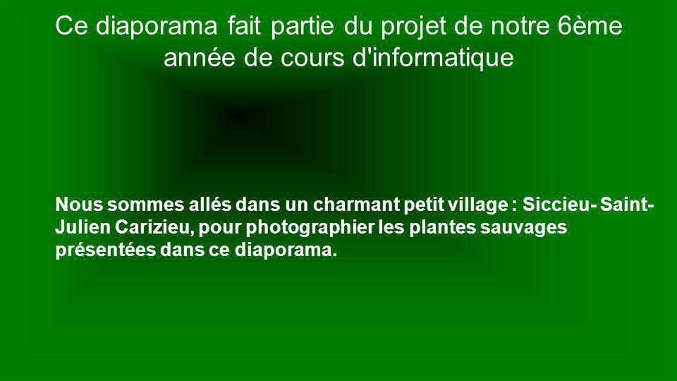 Ce diaporama fait partie du projet de notre 6ème année de cours d informatique Nous sommes allés dans un charmant petit village : Siccieu- Saint- Julien Carizieu, pour photographier les plantes sauvages présentées dans ce diaporama.