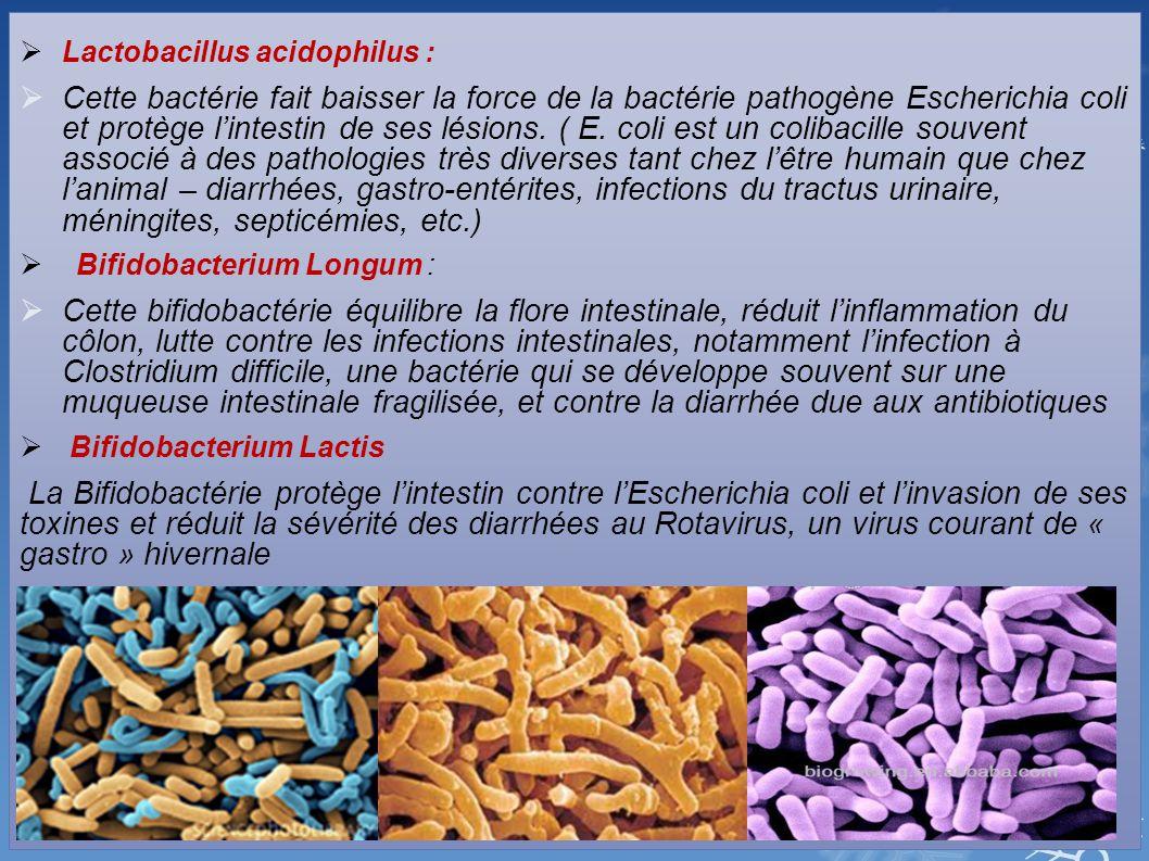  Lactobacillus acidophilus :  Cette bactérie fait baisser la force de la bactérie pathogène Escherichia coli et protège l'intestin de ses lésions. (