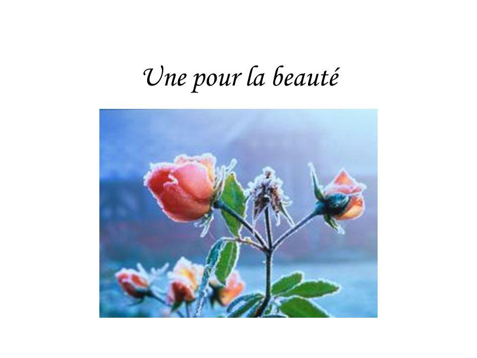Une pour la beauté