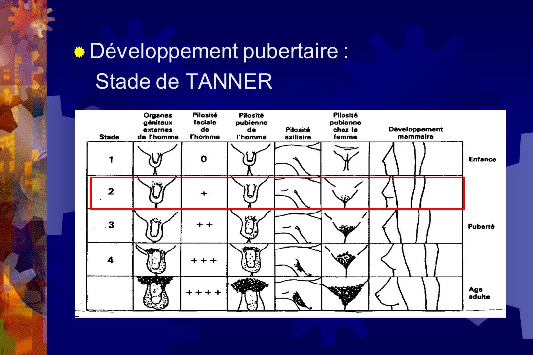  Développement pubertaire : Stade de TANNER