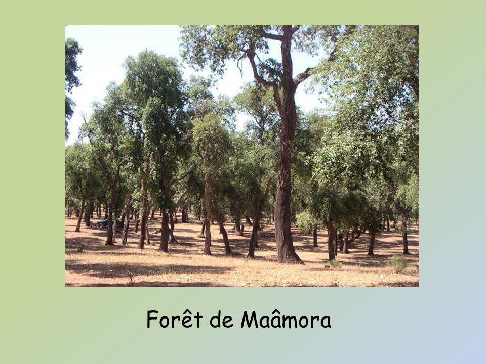 La réserve de Sidi Boughaba Outre la forêt, la région possède un autre atout écologique, la réserve naturelle de Sidi Boughaba.