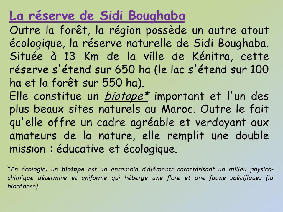 Réserve de Sidi Boughaba