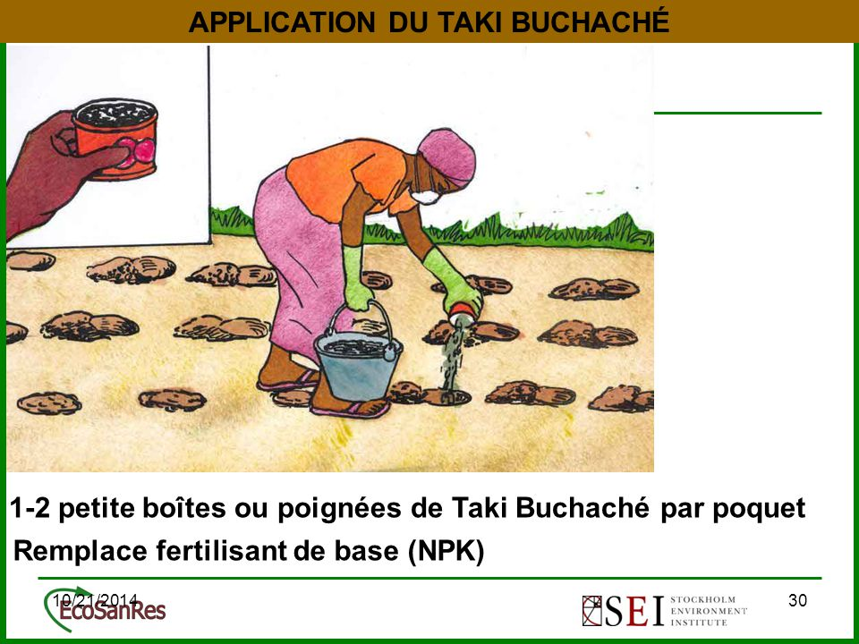 10/21/201430 APPLICATION DU TAKI BUCHACHÉ 1-2 petite boîtes ou poignées de Taki Buchaché par poquet Remplace fertilisant de base (NPK)