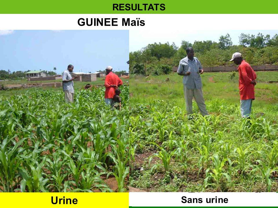 10/21/201435 RESULTATS GUINEE Maïs Urine Sans urine