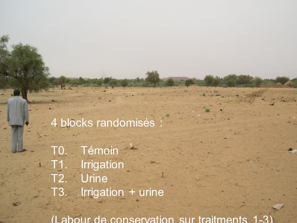 4 blocks randomisés : T0.Témoin T1. Irrigation T2.Urine T3.Irrigation + urine (Labour de conservation sur traitments 1-3)