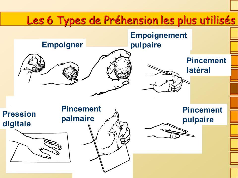 D après PUTZ-ANDERSON Les 6 Types de Préhension les plus utilisés Les 6 Types de Préhension les plus utilisés Empoigner Empoignement pulpaire Pincement latéral Pincement pulpaire Pincement palmaire Pression digitale