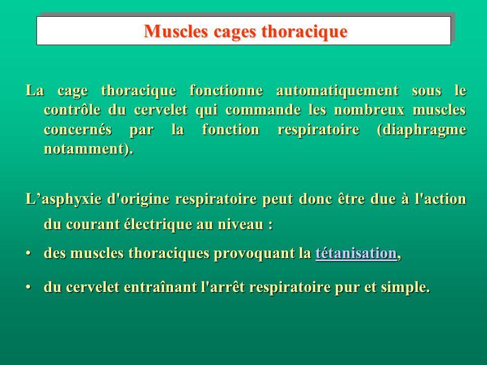 Muscles moteurs Muscles moteurs Les muscles assurent par leur contractibilité et leur élasticité les mouvements du corps.