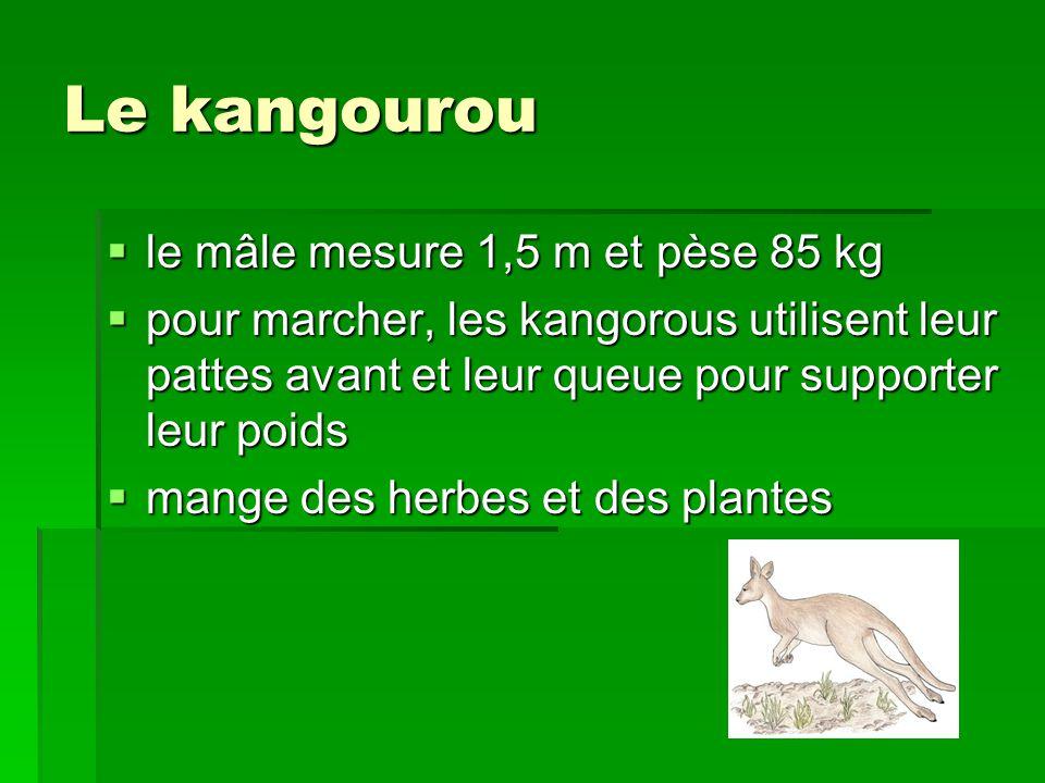 Les marsupiaux  les marsupiaux habitent en Australie  la femelle possède une poche ou elle porte son petit après sa naissance  le petit est dans la poche attaché à une mamelle de sa mère