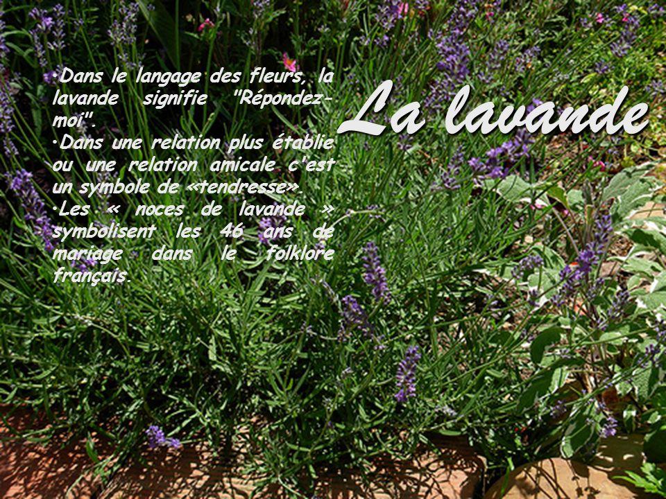 La lavande Dans le langage des fleurs, la lavande signifie