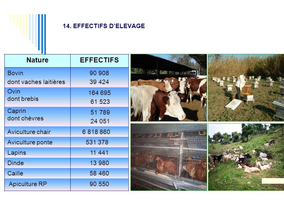 14. EFFECTIFS D'ELEVAGE NatureEFFECTIFS Bovin dont vaches laitières 90 908 39 424 Ovin dont brebis 164 695 61 523 Caprin dont chèvres 51 789 24 051 Av