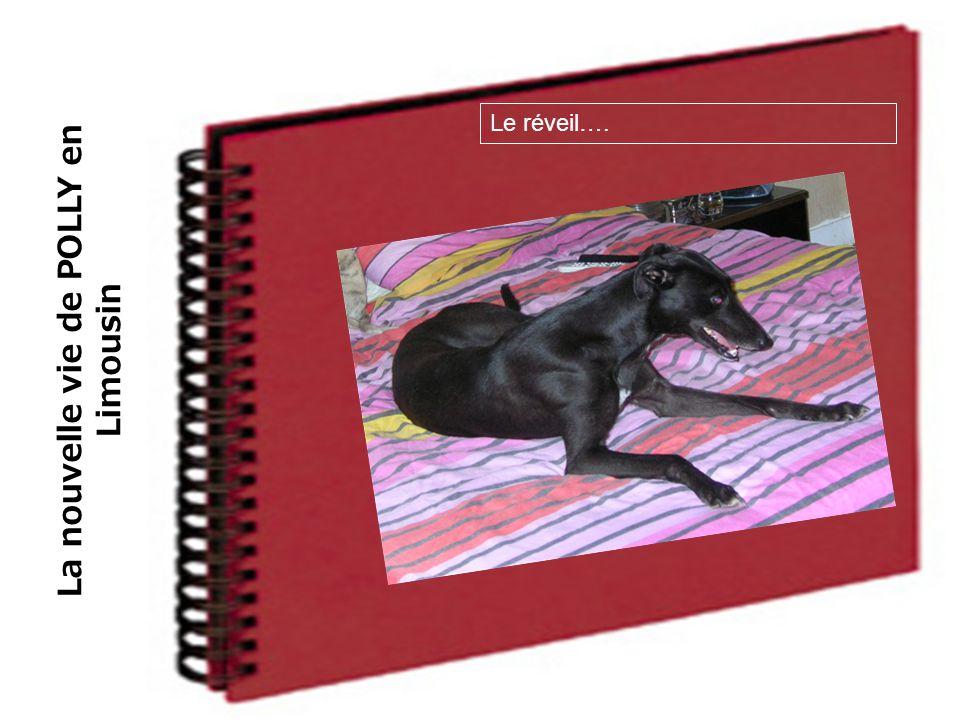 La nouvelle vie de POLLY en Limousin Le réveil….