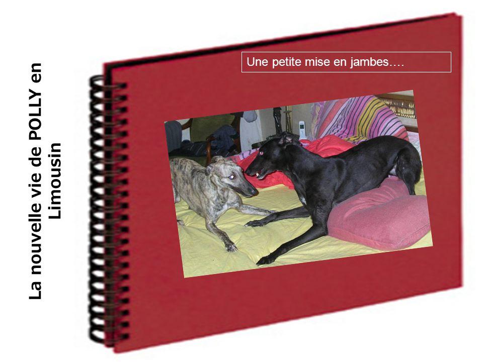 La nouvelle vie de POLLY en Limousin Une petite mise en jambes….