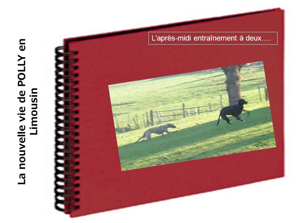 La nouvelle vie de POLLY en Limousin L'après-midi entraînement à deux….