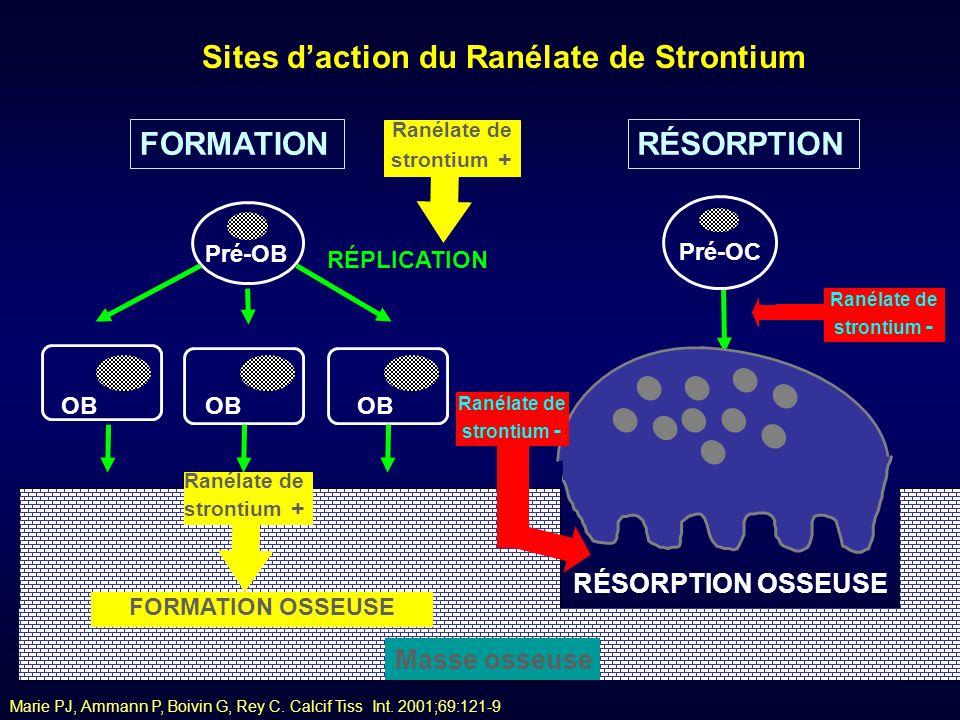 Marie PJ, Ammann P, Boivin G, Rey C. Calcif Tiss Int. 2001;69:121-9 OB FORMATION Pré-OB RÉPLICATION OB RÉSORPTION OC Pré-OC Ranélate de strontium + Ma