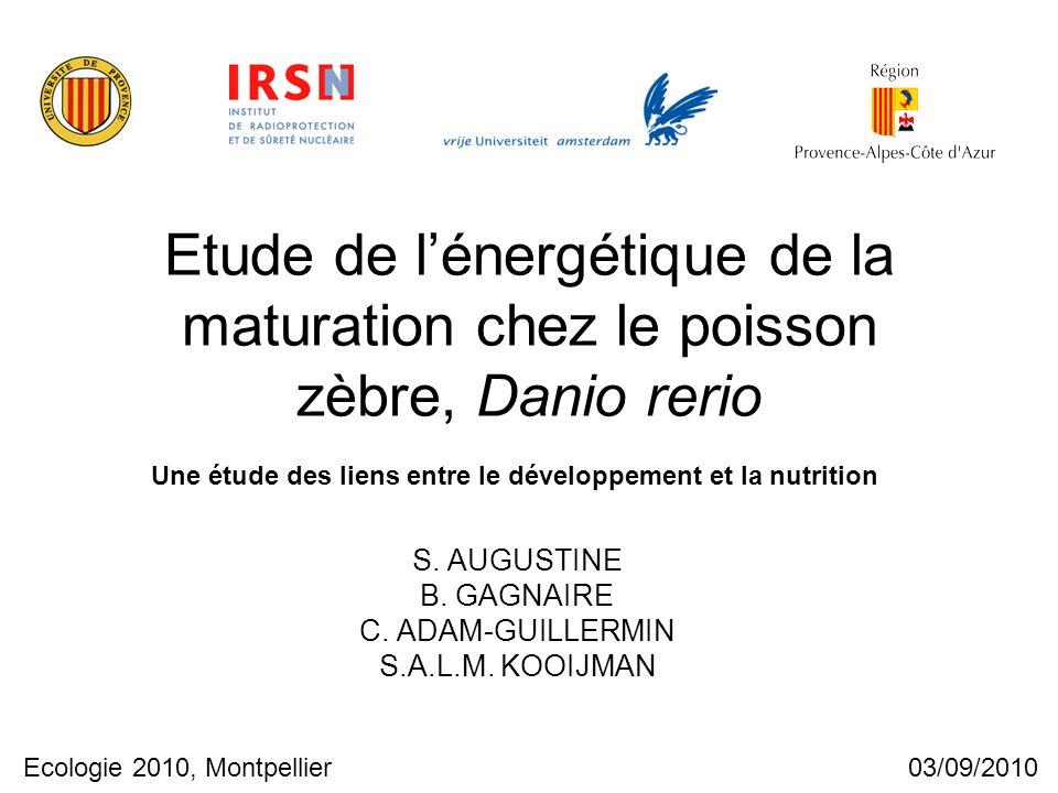 Etude de l'énergétique de la maturation chez le poisson zèbre, Danio rerio S. AUGUSTINE B. GAGNAIRE C. ADAM-GUILLERMIN S.A.L.M. KOOIJMAN Ecologie 2010