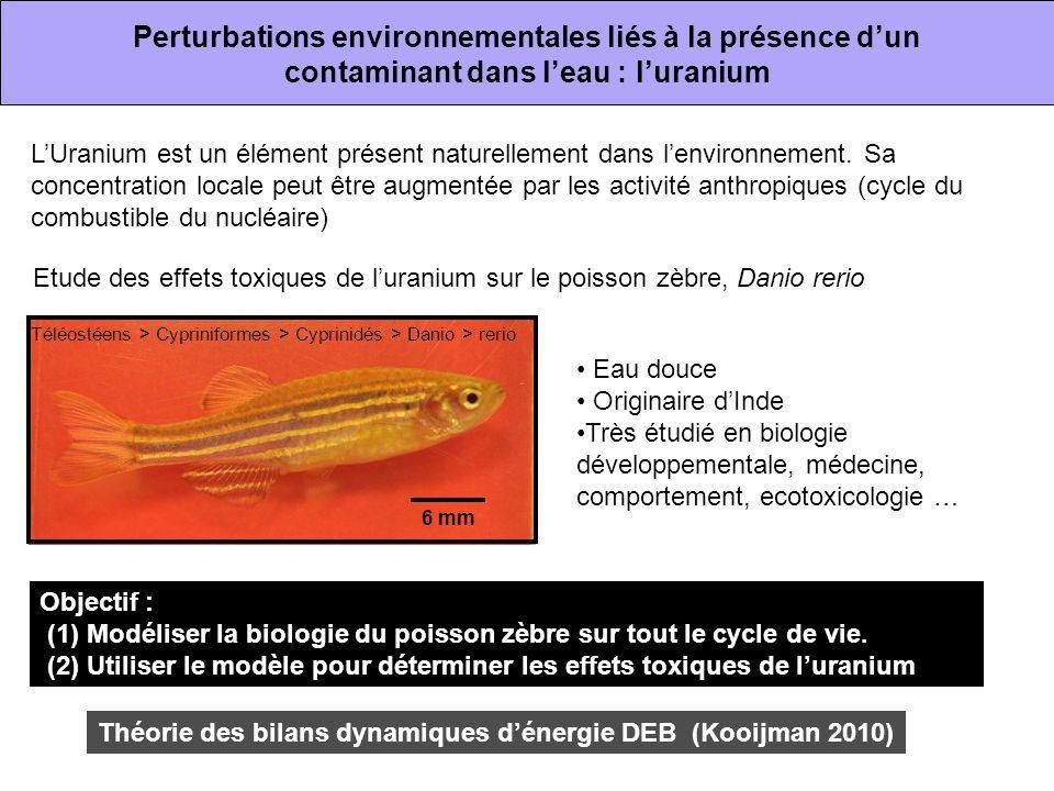 Perturbations environnementales liés à la présence d'un contaminant dans l'eau : l'uranium L'Uranium est un élément présent naturellement dans l'envir