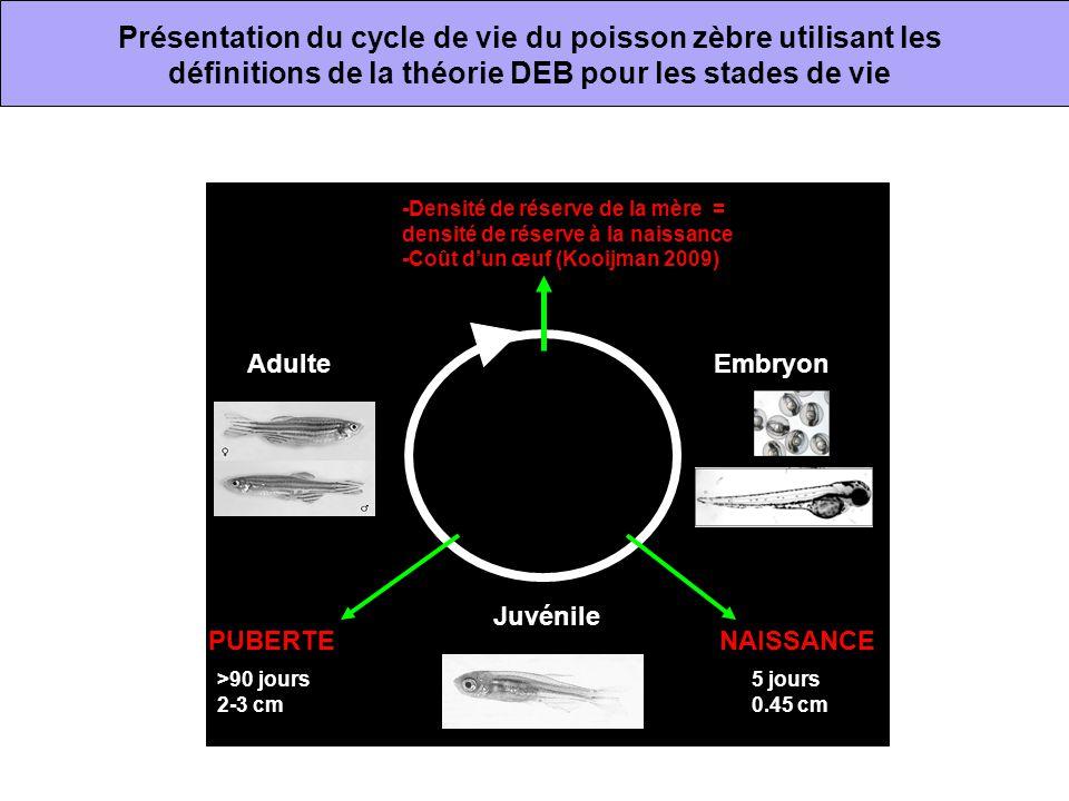 Présentation du cycle de vie du poisson zèbre utilisant les définitions de la théorie DEB pour les stades de vie Embryon Juvénile Adulte NAISSANCEPUBE