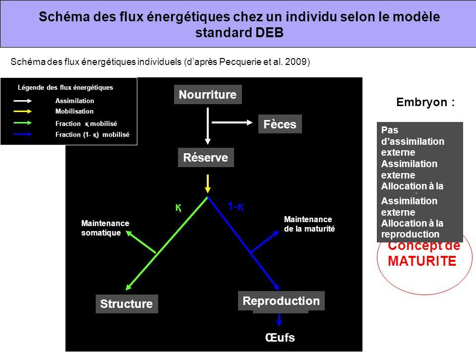 Schéma des flux énergétiques chez un individu selon le modèle standard DEB Réserve StructureMaturité Maintenance de la maturité Reproduction Maintenan