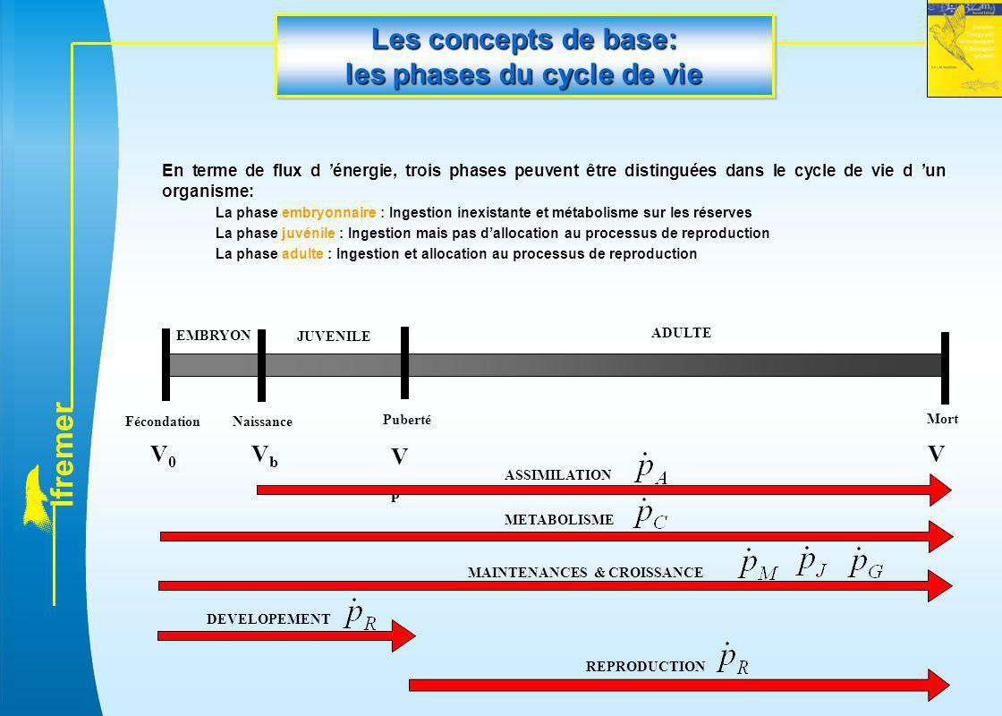 l f r e m e r Les concepts de base: les phases du cycle de vie En terme de flux d 'énergie, trois phases peuvent être distinguées dans le cycle de vie