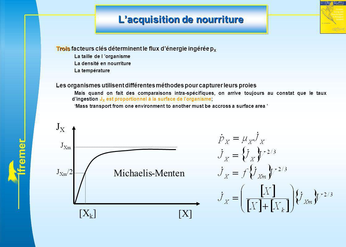 l f r e m e r L'acquisition de nourriture Trois facteurs clés déterminent le flux d'énergie ingérée p X La taille de l 'organisme La densité en nourri