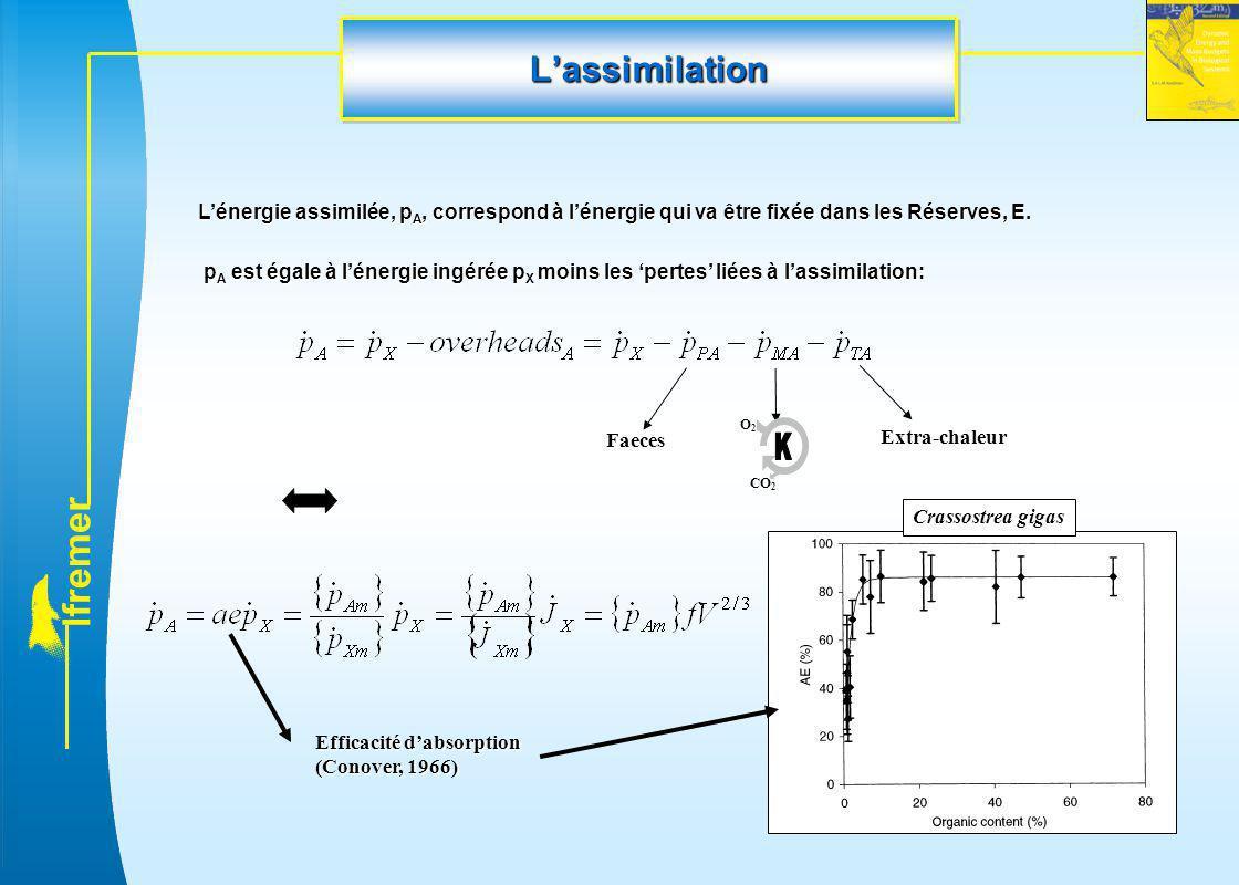 l f r e m e r L'assimilationL'assimilation L'énergie assimilée, p A, correspond à l'énergie qui va être fixée dans les Réserves, E. p A est égale à l'