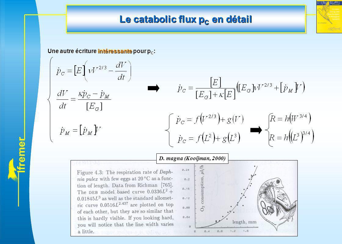 l f r e m e r Une autre écriture intéressante pour p C : D. magna (Kooijman, 2000) Le catabolic flux p C en détail