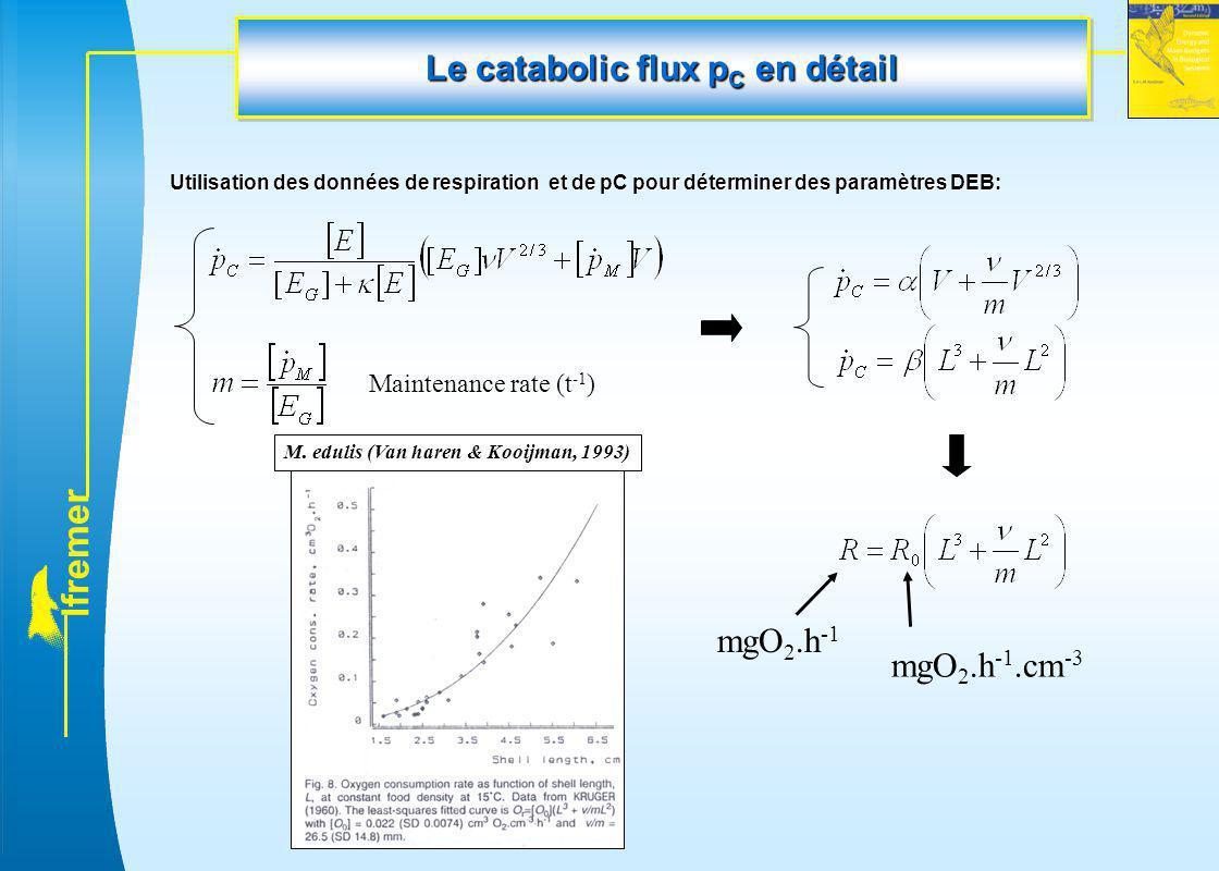 l f r e m e r Utilisation des données de respiration et de pC pour déterminer des paramètres DEB: mgO 2.h -1 mgO 2.h -1.cm -3 M. edulis (Van haren & K