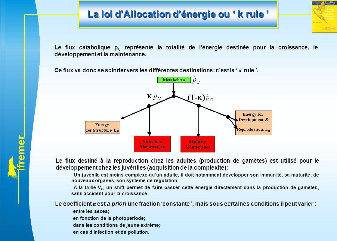 l f r e m e r La loi d'Allocation d'énergie ou ' k rule ' Le flux catabolique p C représente la totalité de l'énergie destinée pour la croissance, le