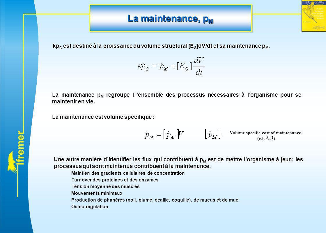 l f r e m e r La maintenance, p M kp C est destiné à la croissance du volume structural [E G ]dV/dt et sa maintenance p M. La maintenance p M regroupe