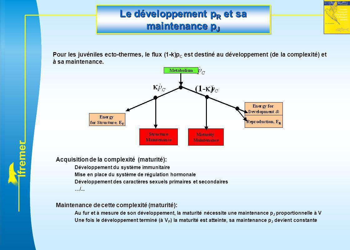 l f r e m e r Le développement p R et sa maintenance p J Pour les juvéniles ecto-thermes, le flux (1-k)p C est destiné au développement (de la complex