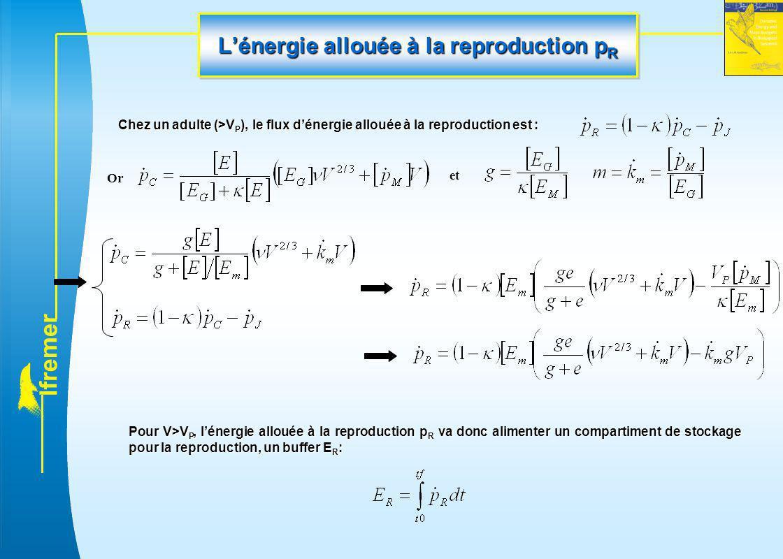l f r e m e r L'énergie allouée à la reproduction p R Chez un adulte (>V P ), le flux d'énergie allouée à la reproduction est : Or et Pour V>V P, l'én