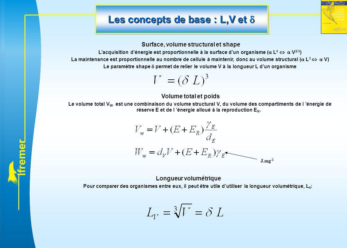 l f r e m e r Les concepts de base : L,V et  Surface, volume structural et shape L'acquisition d'énergie est proportionnelle à la surface d'un organi