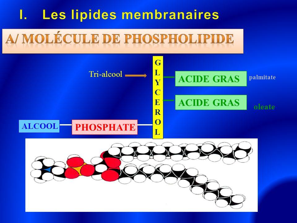 GLYCEROLGLYCEROL ACIDE GRAS PHOSPHATE ALCOOL palmitate oleate Tri-alcool