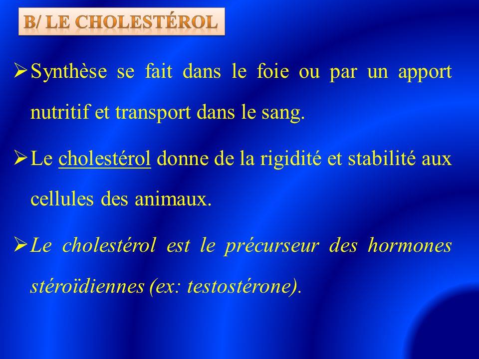  Synthèse se fait dans le foie ou par un apport nutritif et transport dans le sang.  Le cholestérol donne de la rigidité et stabilité aux cellules d