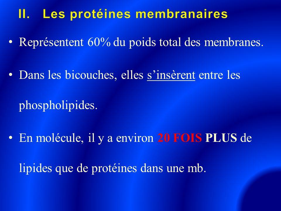 Représentent 60% du poids total des membranes. Dans les bicouches, elles s'insèrent entre les phospholipides. En molécule, il y a environ 20 FOIS PLUS