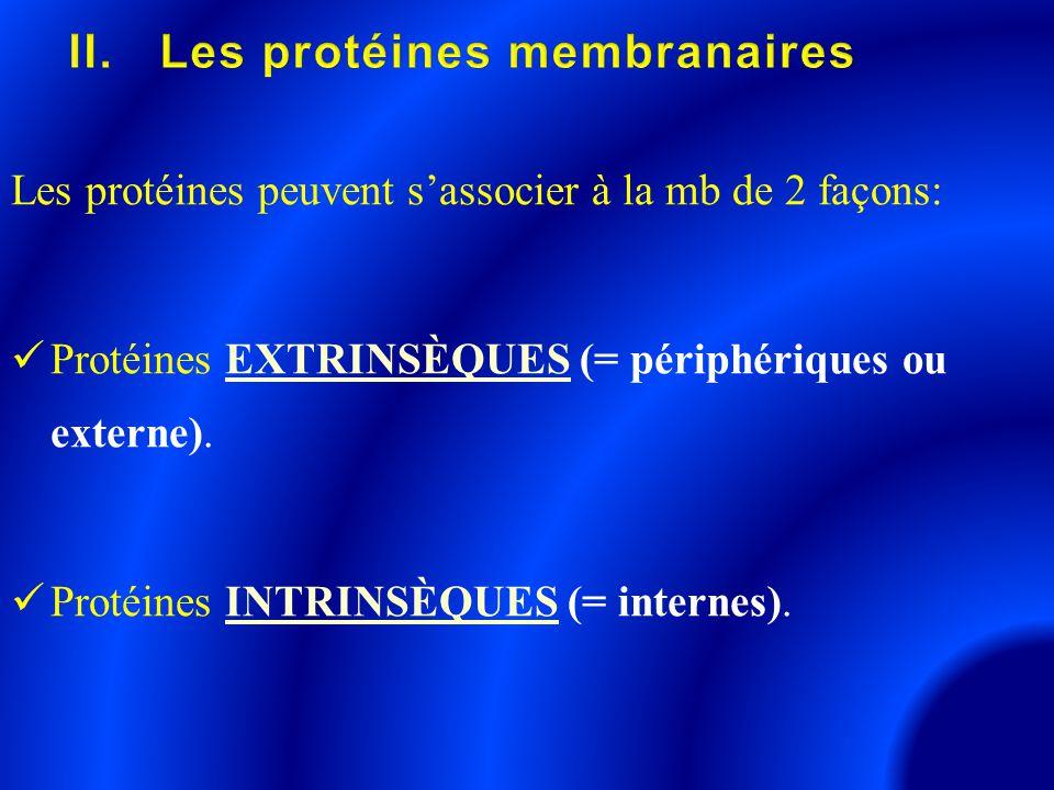 Les protéines peuvent s'associer à la mb de 2 façons: Protéines EXTRINSÈQUES (= périphériques ou externe). Protéines INTRINSÈQUES (= internes).