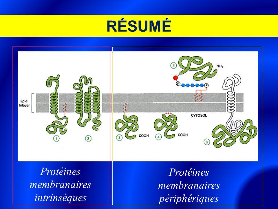 RÉSUMÉ Protéines membranaires intrinsèques Protéines membranaires périphériques