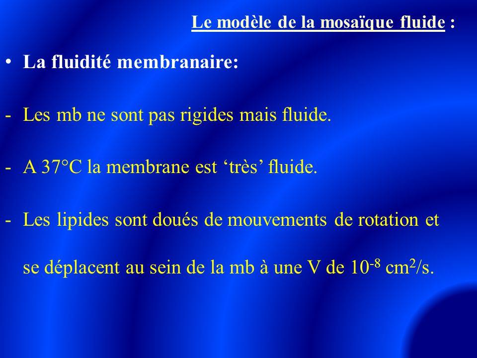 La fluidité membranaire: -Les mb ne sont pas rigides mais fluide. -A 37°C la membrane est 'très' fluide. -Les lipides sont doués de mouvements de rota