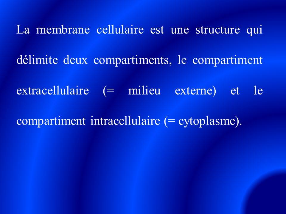 La membrane cellulaire est une structure qui délimite deux compartiments, le compartiment extracellulaire (= milieu externe) et le compartiment intrac