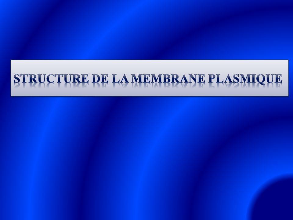 Les membranes cellulaires sont des doubles couches phospholipidiques (= bicouche).